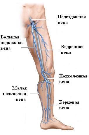 Таблетки от варикоза вен на ногах отзывы